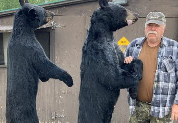 Man With Two Black Bears