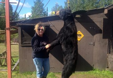 Woman With Hunted Bear Hung On Chains